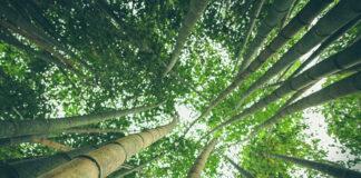 Opakowania ekologiczne – Slowpack