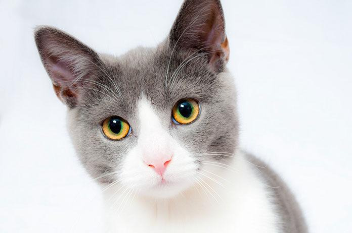 żwirek silikonowy dla kota