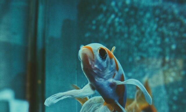 Mętna woda w akwarium
